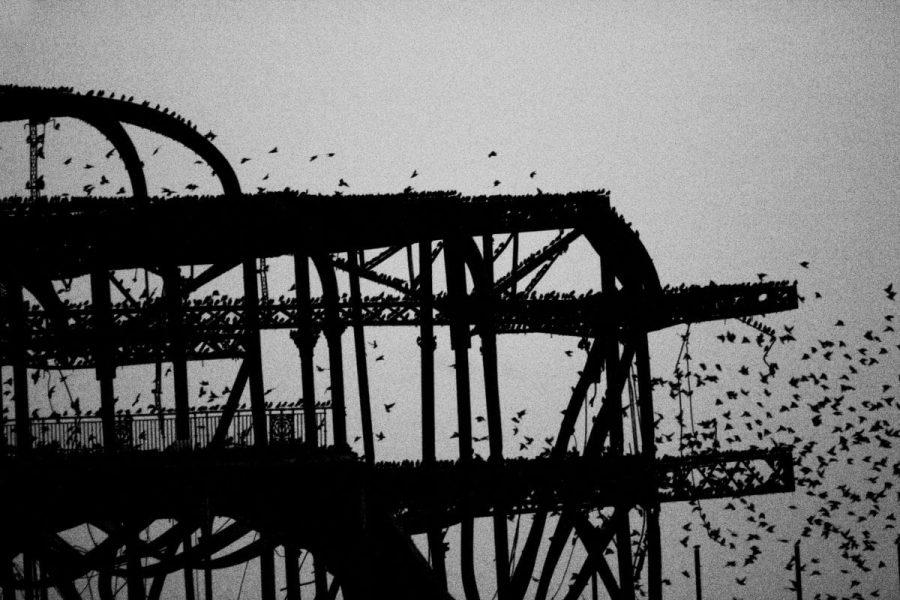 Murmuration at the Pier