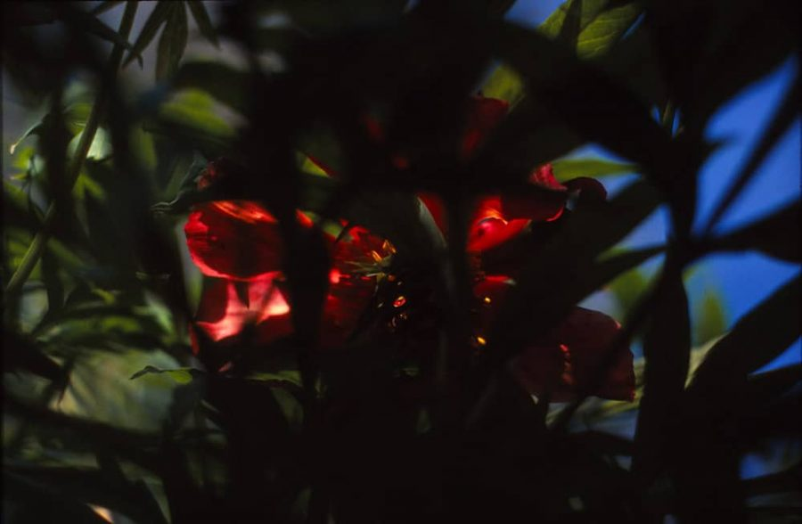 Hidden Red Flower