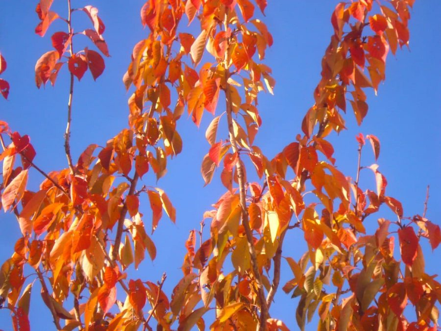 Autumn Sky Leafs