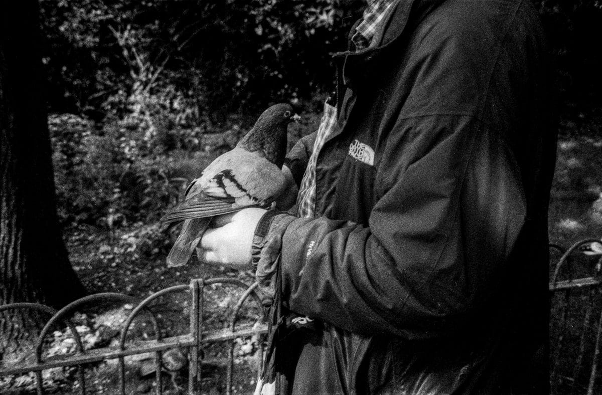 Photograph of a man holding a pidgin in a park