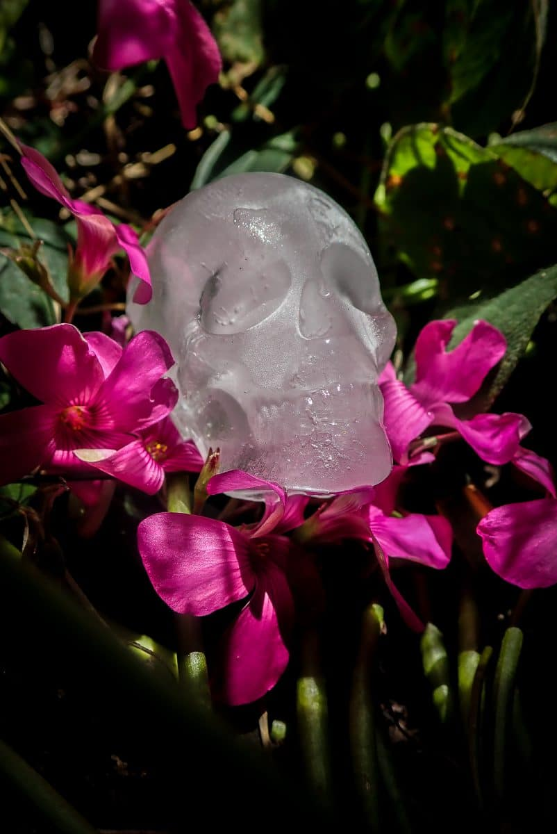 Ice skull on flowers photograph by kevin beck