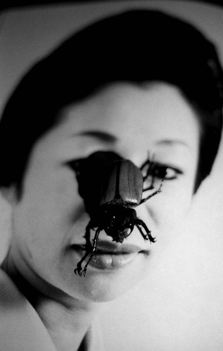 Black and white photograph of a tropical bug on a classical photograph of a Japanese lady.