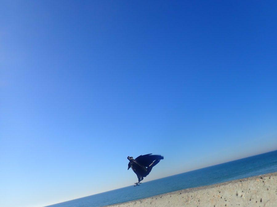Blue sky, black crow