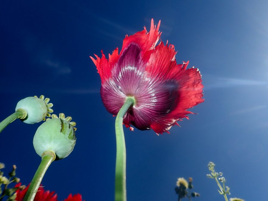 Under a flower