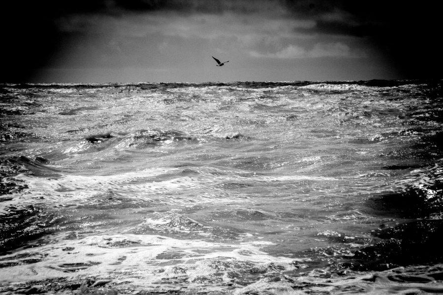 Bird over the sea